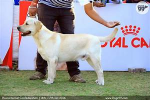 Pune All Breed Dog Show Pkc 2016 79