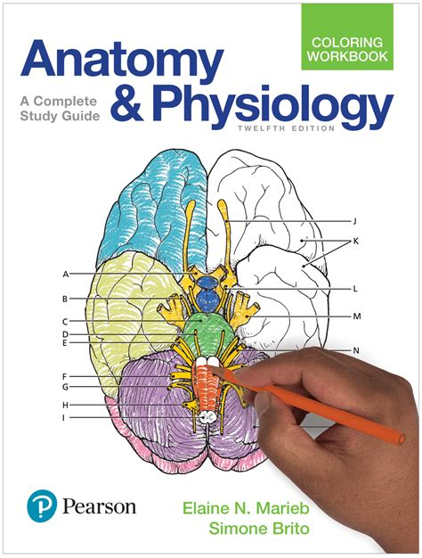 marieb keller essentials of human anatomy physiology