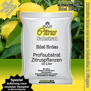 Dünger Für Zitronenbaum : zitronenbaum pflanzen einfach selber ziehen eat smarter ~ Watch28wear.com Haus und Dekorationen