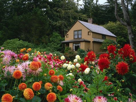 garden and flowers flower garden ideas plants photograph garden plants flowe