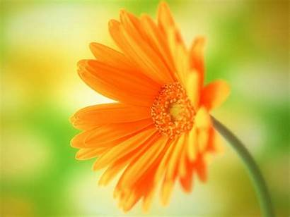 Flower Yellow Background Backgrounds Flowers Pretty Wallpapers