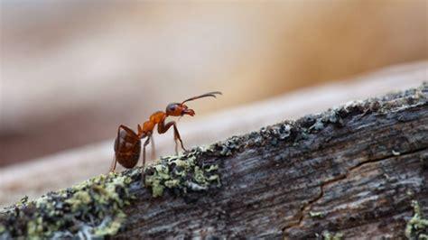 Hausmittel Gegen Ameisen Was Hilft Gegen Ameisen?
