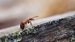 Mittel Gegen Ameisen : hausmittel gegen ameisen was hilft gegen ameisen ~ Frokenaadalensverden.com Haus und Dekorationen