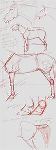 107 Best How To Draw Horse Images On Pinterest