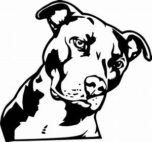 Pitbull Dog Black And White Drawings - Great Drawing