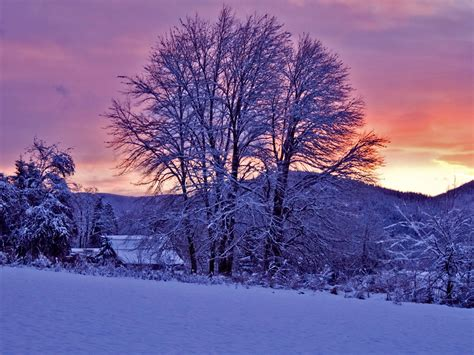 Hd Winter Photo by Sunset Trees Winter Wallpapers Sunset Trees Winter