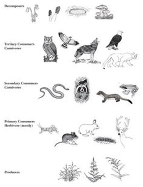 animal habitats printables worksheetbgif  images