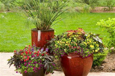 Gardening  Small Space And Container Gardening Small