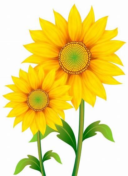 Clipart Transparent Sunflowers Sunflower Save Gclipart 1567