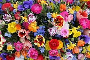 Bouquet De Printemps : les 5 couleurs vedettes du printemps 2015 ~ Melissatoandfro.com Idées de Décoration