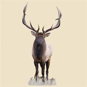 Bull Elk Indoor Wall Graphic, Front - facing - 221151
