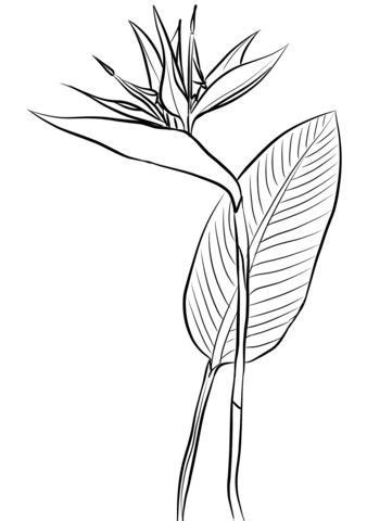 Bird of paradise Coloring pages. Select from 30508 printable Coloring pages of cartoons, animals
