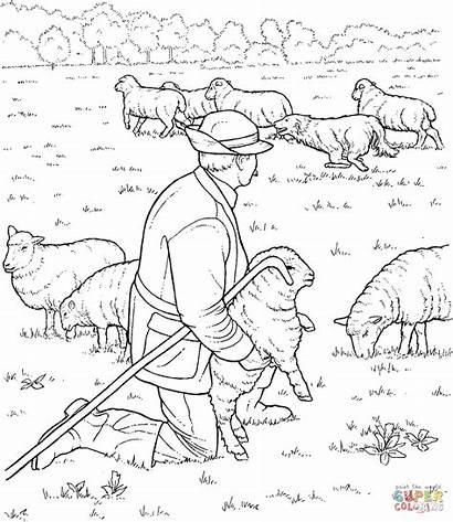 Coloring Shepherd Sheep Disegno Pastor Pecora Colorare