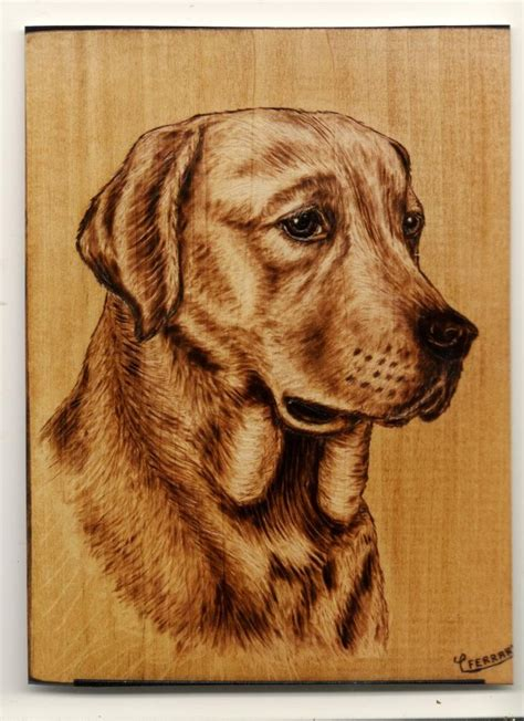 labrador dog pyrography  carloferrariodeviantart