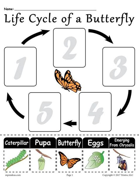 quot cycle of a butterfly quot free printable worksheet 912 | 6d9fcff912ea2a523381cca233fc95ff