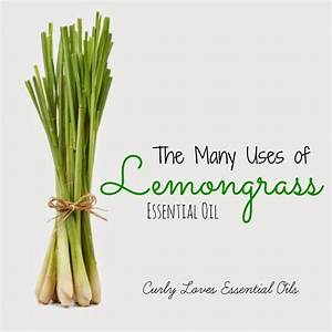 Lemongrass Essential Oil Uses And Benefits