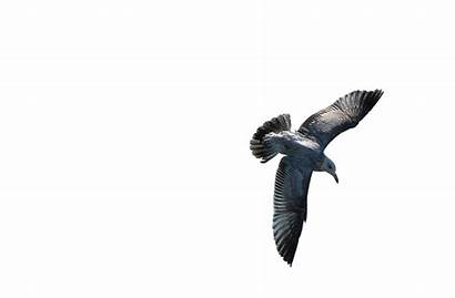 Burung Terbang Gambar Bagus Paling Pixabay Bird