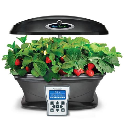 miracle gro aerogarden led grow herbs indoors gearnova