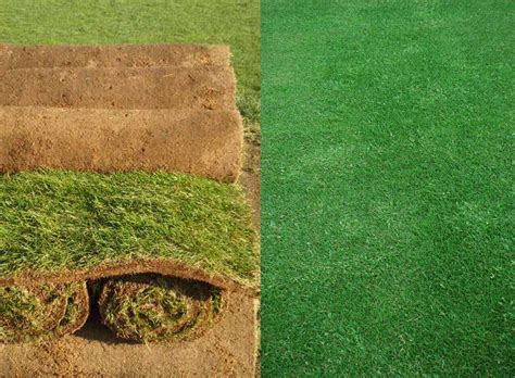 Fresh / Real Garden Lawn Grass Rolls From Only