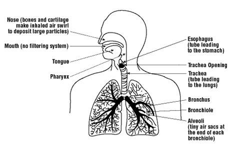 particulates enter  respiratory system osh