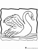 Swan Coloring Pages Animal Print Jr Activities Craft 2009 sketch template