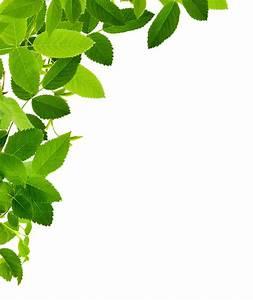 Free download - leaves left corner transparent PNG image ...
