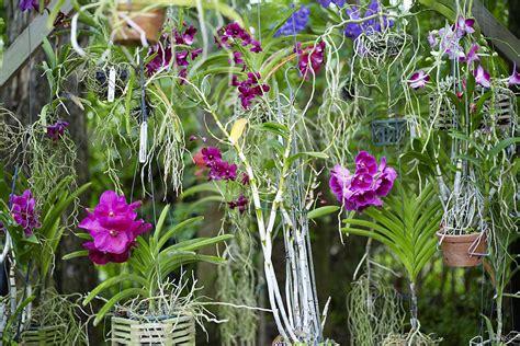 fertilize  orchid collection