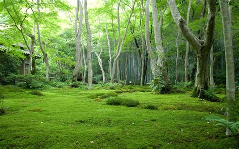 Green Forest Image by Green Forest Wallpapers Green Forest Stock Photos
