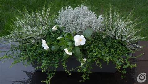 piante da davanzale le fioriere invernali per il balcone e il davanzale casa