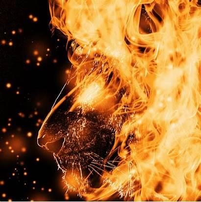 Lion Fire Wallpapers Mark Antony Capitan Flame