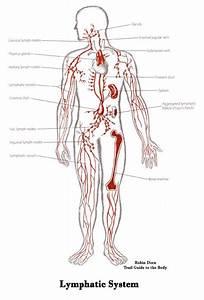 37 Best Lympedema Lipedema Dercum U0026 39 S Disease Adiposa