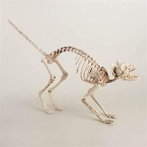 Cat Skeleton World Market