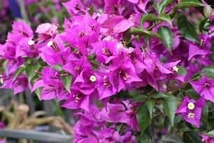 Garten Pflanzen Pralle Sonne by Balkonpflanzen Pralle Sonne