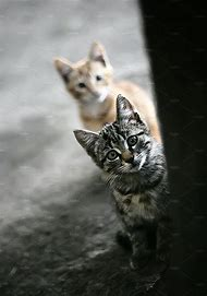 Homeless Cats and Kittens