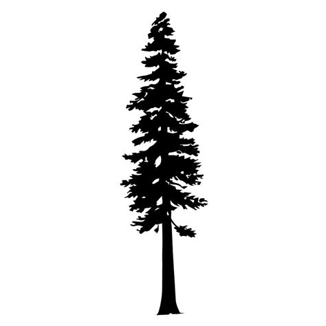 redwood tree png   cliparts  images