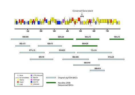 bac a shoing genome sequence annotation of ctg1034 showing the wheat bac clones that scientific