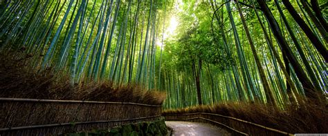 bamboo forest kyoto japan  hd desktop wallpaper