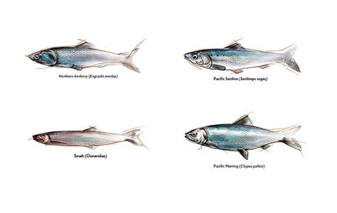 state   science forage fish   california