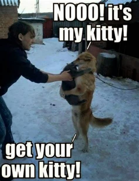 Meme Pictures With Captions - 30 funny animal captions part 19 30 pics amazing creatures
