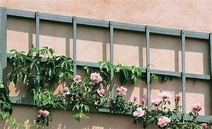 Plantes Grimpantes Mur : plantes grimpantes aux multiples fonctions portail maison ~ Melissatoandfro.com Idées de Décoration