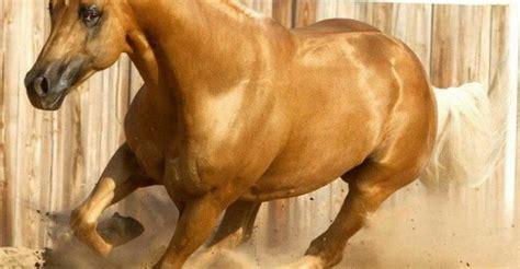 pferde bilder zeichnen kostenlos herunterladen bilder
