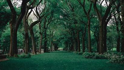 Trees Park Grass Nature Laptop Background 1080p