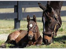 Kentucky Derby 138 horse profile Zenyatta [Horse racing