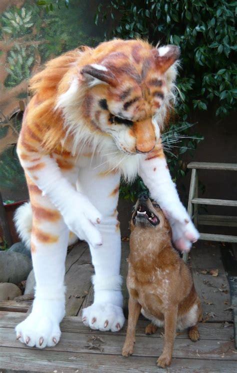 Golden Tiger Pet Doggie Lilleahwest Deviantart