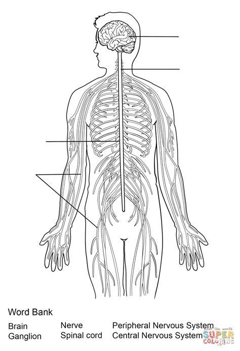 juegos de ciencias juego de sistema nervioso central