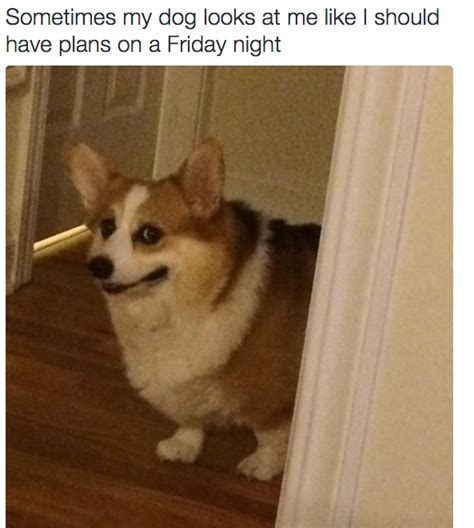 Friday Dog Meme - 19 pictures that tells your real truth how you really want to spend your weekend