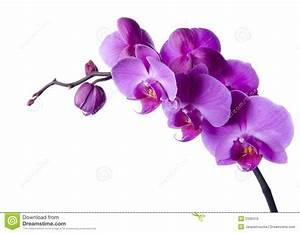 Schöne Orchideen Bilder : sch ne orchideen lizenzfreies stockbild bild 2330416 ~ Orissabook.com Haus und Dekorationen