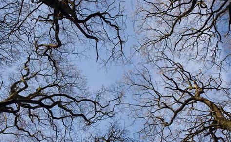 wallpaper branch tree  sky wallpaper