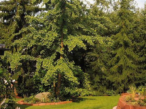 Garten Und Landschaftsbau Odenwald by Gartengestaltung Gartenbau Und Landschaftsbau Im