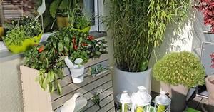 Bäume Für Den Balkon : hochbeet f r den balkon aufbauen und bepflanzen mein sch ner garten ~ Frokenaadalensverden.com Haus und Dekorationen